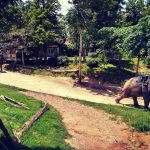 ELEPHANT VILLAGE PATAYA