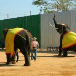 دهکده فیل های پاتایا